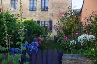 Flowers in an old backyard