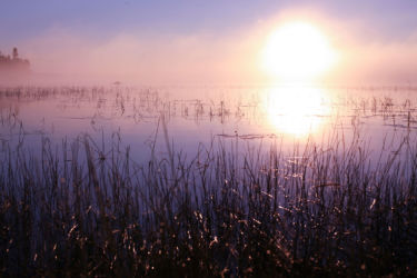 Foggy sunrise over the reeds