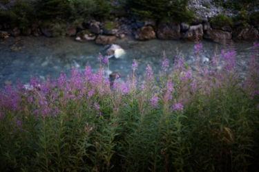 Purple flowers and stream