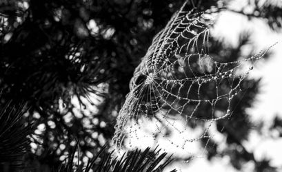 Spiderweb in black and white with rain drops